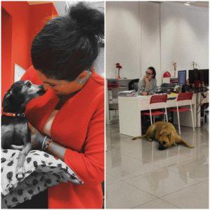 perros oficina zaragoza